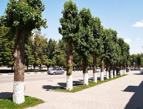 Рабочая встреча по проблемам обрезки деревьев и состояния древесных насаждений на дворовых территориях