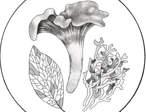 Международный научно-практический семинар «Биоразнообразие грибов и лишайников особо охраняемых природных территорий»