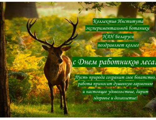 День работников леса!